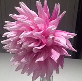 Pink Leycett
