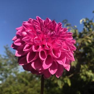 Pink Rossendale Luke