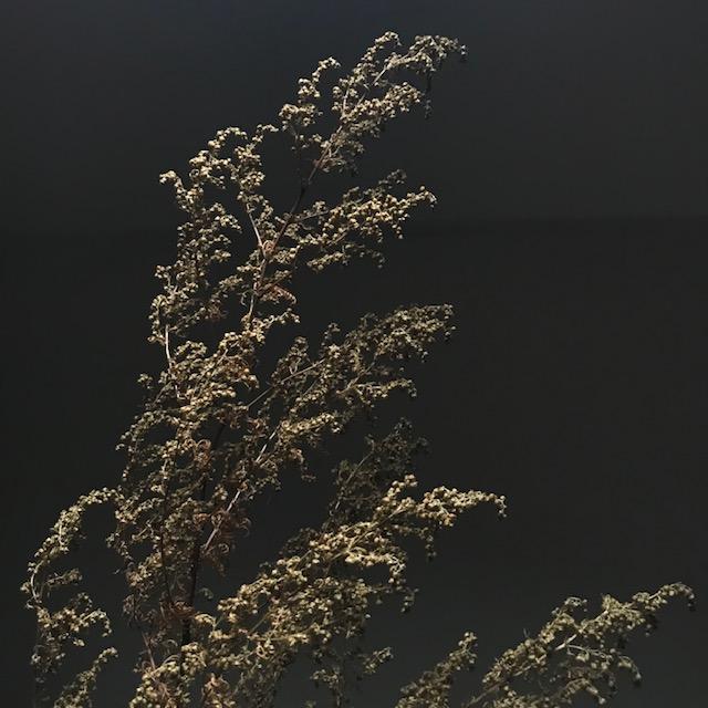 Artemisia - fabulous fragrance